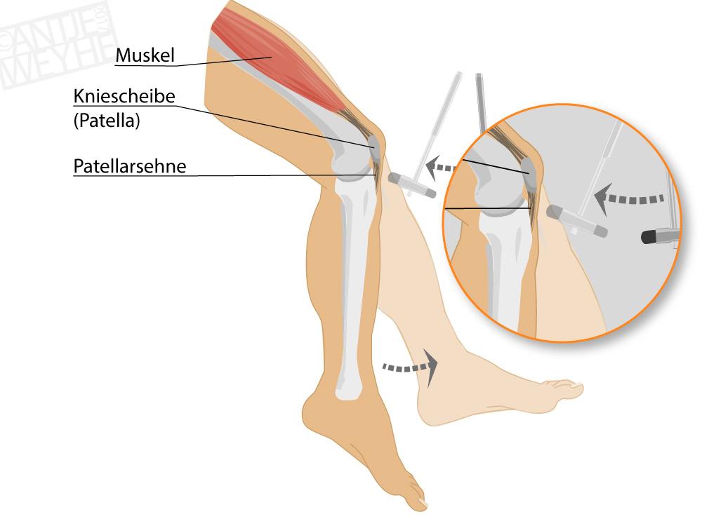 G05-02-Anatomie